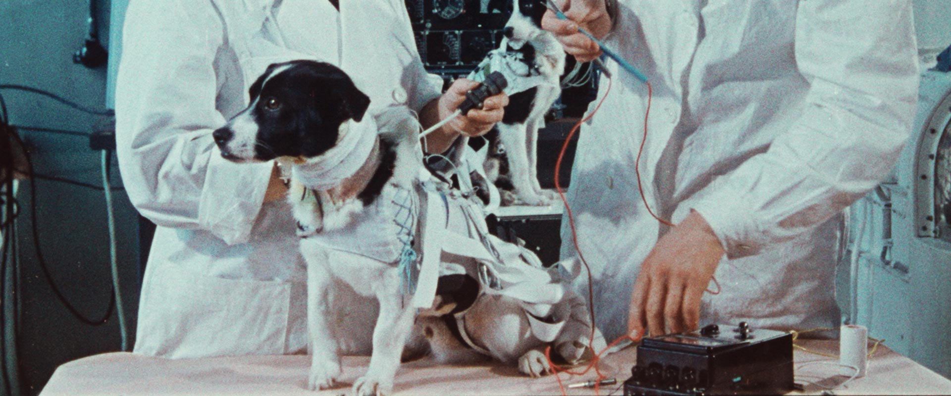 SPACE-DOGS-STILL-2