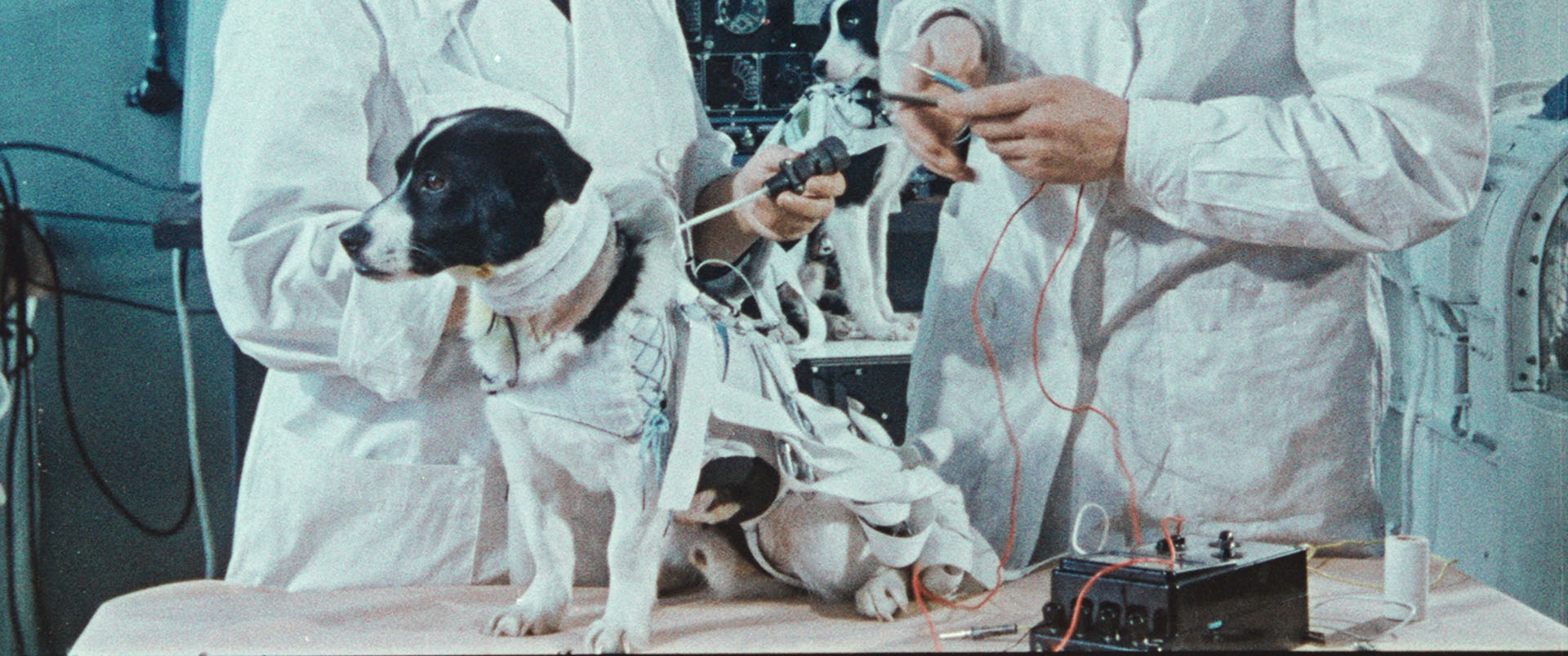 SpaceDogs_Still_02_web